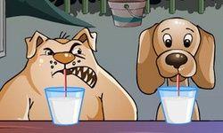 Köpek Yemek Şampiyonası