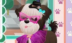 Psi Salon Piękności