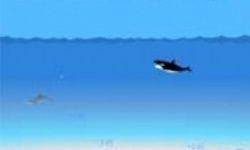 Orca Escape