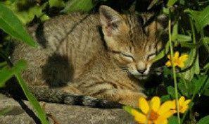 FTD: Cutest Cats