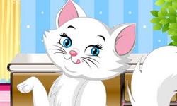 Precious Little Kitty