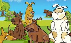 Dogs Fair