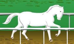 Wit Paard Uitdaging