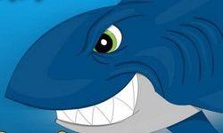 Seals Vs Sharks
