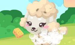 Poodle Care