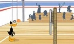 Daffy Volleybal