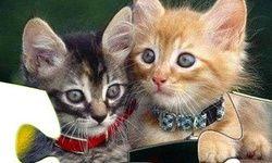 Kissa Palapelit 2