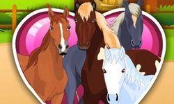 Horsecare Apprenticeships