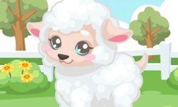 Lamb Care