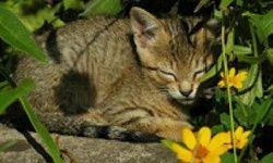 Hľadanie Rozdielov: Mačiatka