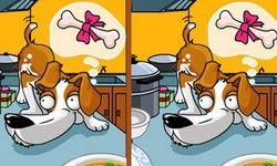 Etsi Eroavaisuudet: Koirat