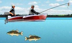 Abborre Fiske Pro