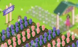 Taman Lavender Provence
