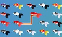Rybí Mahjong