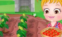 Mała Hazel Uprawia Pomidory