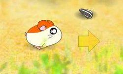 Hamsters Race