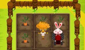 Bunny on Farm