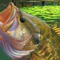 Järvikalastus: Vihreä Laguuni